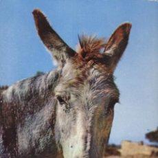 Postales: POSTAL SERIE II Nº 3428 BURRO - MULA- ASNO. Lote 155786966
