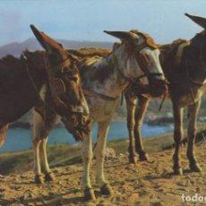 Postales: POSTAL Nº 1441 BORRICOS TIPICOS POSTAL TIPICA DE ESPAÑA. Lote 155832918