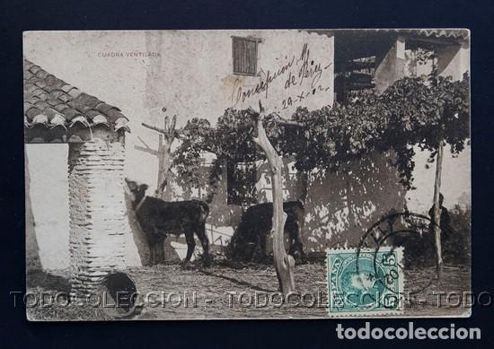 POSTAL UNA CUADRA VENTILADA . COLECCION CANOVAS - HAUSER Y MENET CA AÑO 1900 (Postales - Postales Temáticas - Animales)