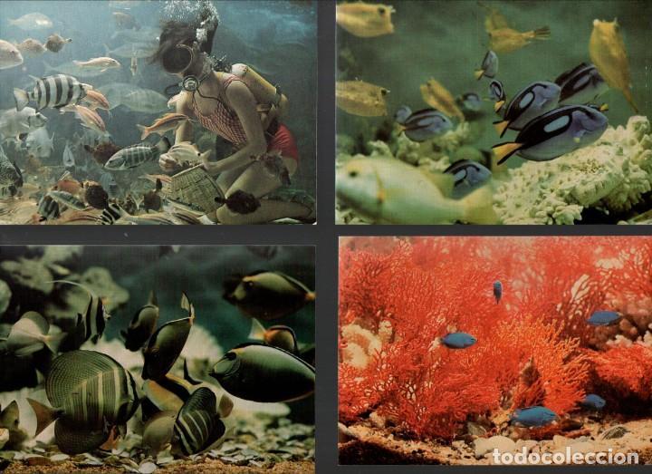 Postales: LOTE DE POSTALES DE UN ACUARIO JAPONÉS - AÑOS 1970 - Foto 3 - 158659030