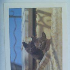Postais: BONITA PORTAL DE GATOS , FRANCIA , 1985 ... 12 X 17 CM. Lote 158749746