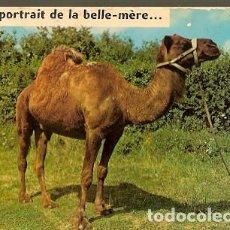 Postales: FRANCIA & CIRCULADO, DROMEDARIO, HUMOR ... CONDÓN, PARÍS 1986 (716). Lote 161108474