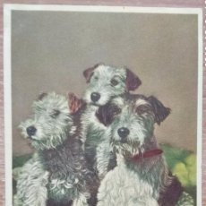 Postales: POSTAL DE 1916. Lote 162419298