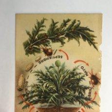 Postales: AGRICULTURA. POSTAL SECCIÓN FITOPATOLOGÍA Y PLAGAS DEL CAMPO.ALTICA DE LA ALCACHOFA . (H.1940?). Lote 164108193