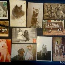 Postales: LOTE DE 11 POSTALES CPA PERROS Y GATOS, 2 FOTOS Y 1 CPSM, VER FOTOS. Lote 165281174