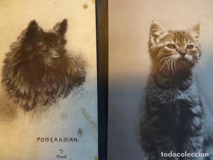 Postales: LOTE DE 11 POSTALES CPA PERROS Y GATOS, 2 FOTOS Y 1 CPSM, VER FOTOS - Foto 6 - 165281174