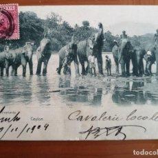 Postales: POSTAL ANIMALES ELEFANTES CEYLAN ELEPHANTS ELEFANTE DE ASIA CIRCULADA 1904 SRI LANKA PERFECTA CONSE. Lote 166244878
