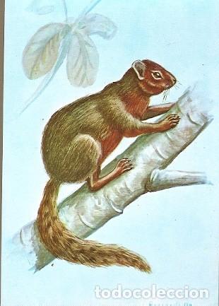 MOZAMBIQUE ** & INTERO, LOS MAMÍFEROS DE MOZAMBIQUE, ARDILLA, PARAXERUS VINCENTI, HAYMAN (1950) (Postales - Postales Temáticas - Animales)