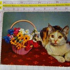 Postales: POSTAL DE ANIMALES. GATOS. GATO FLORES. 1734. Lote 167591204