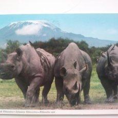 Postales: BLACK RHINOCEROS.KENIA.CIRCULADA.1976. Lote 169178794