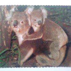 Postales: KOALA WITH YOUNG.AUSTRALIA. Lote 169182962