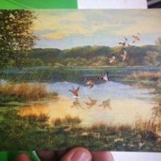 Postales: POSTAL ALEMANA PATOS 1963 VON GEORGE MAJEWICZ. Lote 169877440