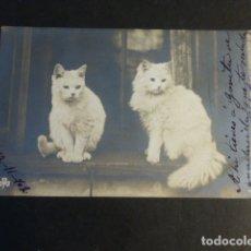 Postales: GATOS POSTAL . Lote 172054100