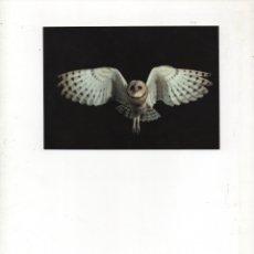 Postales: LECHUZA COMÚN-SIN CIRCULAR-1992. Lote 172943292