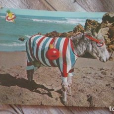 Postales: POSTAL BURRO. Lote 173977697