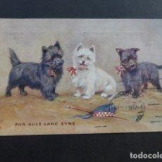 Postales: POSTAL PERROS 1930. Lote 175505762