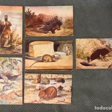 Postales: MAMÍFEROS. SERIE V (6) PEQUEÑAS CROMOLITOGRAFÍAS. SUC. DE HERNANDO. MADRID (H.1920?). Lote 175695204
