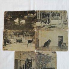 Postales: LOTE DE 6 ANTIGUAS POSTALES DE ANIMALES, NOMBRES EN CATALÁN.. Lote 175710018