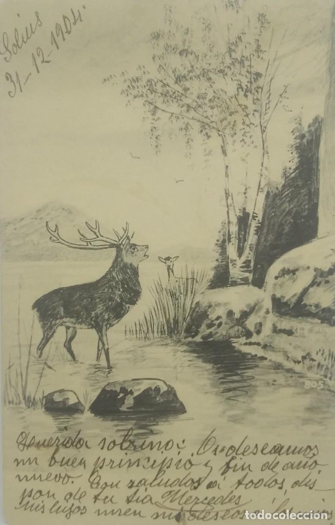 1904 CIERVO (Postales - Postales Temáticas - Animales)