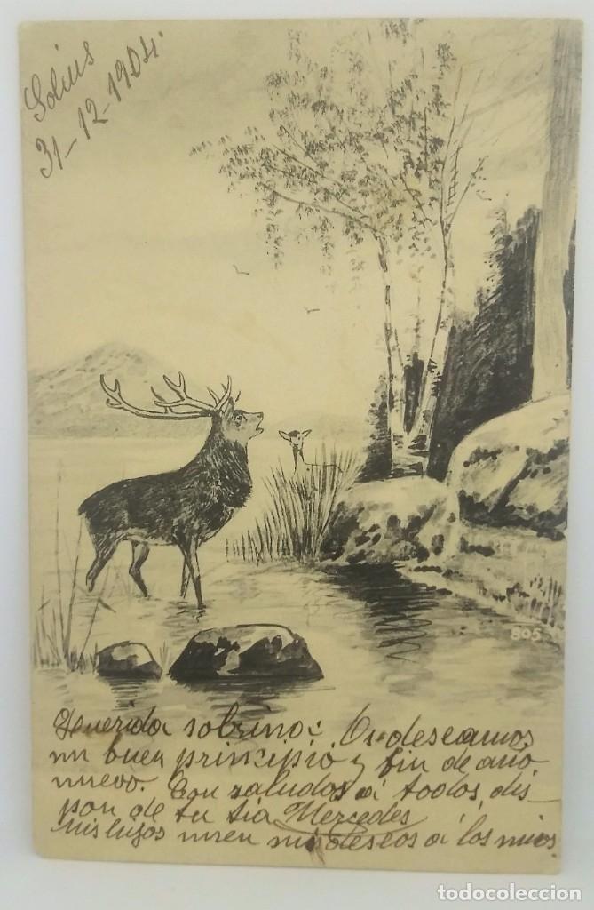 Postales: 1904 Ciervo - Foto 2 - 175961795