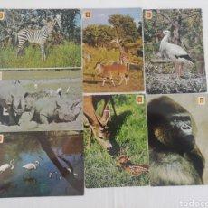 Postales: LOTE DE 11 POSTALES. ANIMALES SALVAJES. Lote 176422414