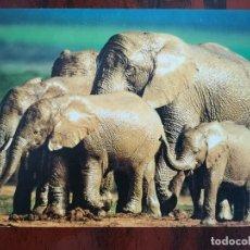 Postales: POSTAL ELEFANTES ELEFANTE AFRICANO AFRICA ELEPHANTS D´AFRIQUE PERFECTA CONSERVACION. Lote 178027512