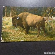 Postales: BISONTE POSTAL. Lote 178240676