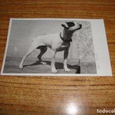 Postales: (ALB-TC-107) POSTAL PERRO . Lote 179212257