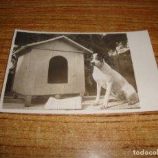 Postales: (ALB-TC-107) POSTAL PERRO . Lote 179212265
