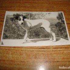 Postales: (ALB-TC-107) POSTAL PERRO . Lote 179212278