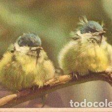 Postales: BELGICA & CIRCULADO, FANTASIA, AVES, PORTALEGRE A LISBOA 1952 (5203. Lote 180138062
