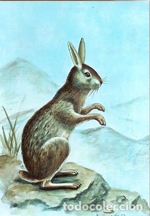MOZAMBIQUE ** & MAMÍFEROS DE MOZAMBIQUE, LIEBRE, PRONOLAGUS CRASSICAUDATUS, GEOFFROY 1983 (1832) (Postales - Postales Temáticas - Animales)