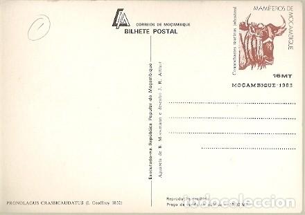 Postales: Mozambique ** & Mamíferos de Mozambique, Liebre, Pronolagus Crassicaudatus, Geoffroy 1983 (1832) - Foto 2 - 181958740
