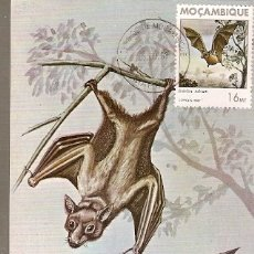 Postales: MOZAMBIQUE & I.P MAMIFEROS DE MOÇAMBIQUE, MORCEGO, EIDOLON HELVUM, KERR, MAPUTO 1988 (1792). Lote 181959857