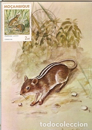 MOZAMBIQUE & I.P MAMIFEROS DE MOÇAMBIQUE, RHABDOMYS PUMILIO, SPARRMAN, MAPUTO 1983 (1784) (Postales - Postales Temáticas - Animales)