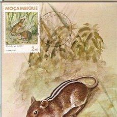 Postales: MOZAMBIQUE & I.P MAMIFEROS DE MOÇAMBIQUE, RHABDOMYS PUMILIO, SPARRMAN, MAPUTO 1983 (1784). Lote 181960608