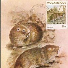 Postales: MOZAMBIQUE & I.P MAMIFEROS DE MOÇAMBIQUE, CRYPTOMYS HOTTENTOTUS, GRAY, MAPUTO 1988 (1864). Lote 181960777