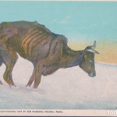 Postales: AMERICA POSTCARD - BEN ROBERTS, HELENA, MONTANA - WAITING FOR A CHINOOK OR THE LAST OF FIVE THOUSA. Lote 182663577
