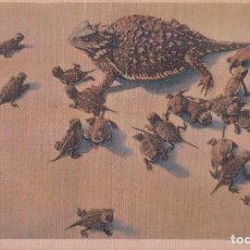 Postales: POSTAL ANIMAÑ HORNED TOAD AND YOUNG . Lote 182749685