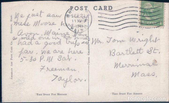 Postales: POSTAL RENO - BULL MOOSE IN THE MAINE WOODS - AMERICANA - CIRCULADA - Foto 2 - 182964775