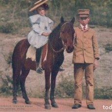 Postales: POSTAL CABALLO - PONY - ZOOLOGICO NEW YORK. Lote 183298657