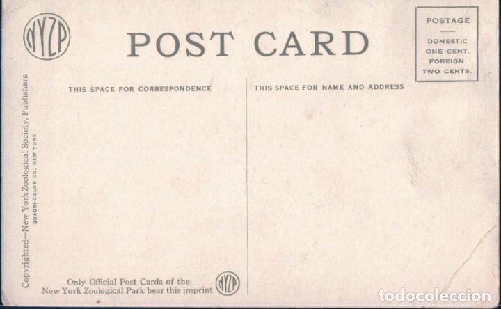 Postales: POSTAL CABALLO - PONY - ZOOLOGICO NEW YORK - Foto 2 - 183298657