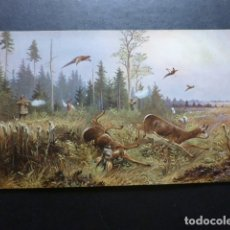 Postales: ANIMALES EN EL BOSQUE Y CAZADOR POSTAL . Lote 183399561