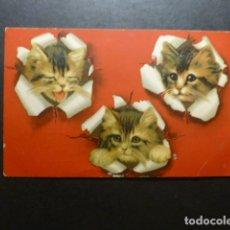 Postales: CABEZAS DE GATO POSTAL . Lote 183400055