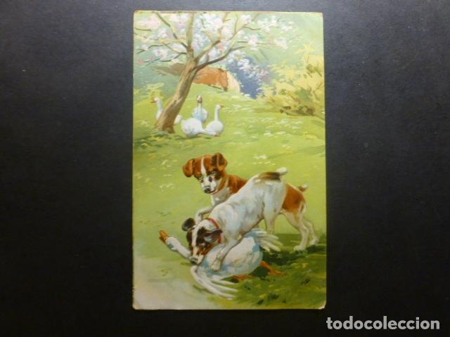 PERROS CON OCAS POSTAL (Postales - Postales Temáticas - Animales)