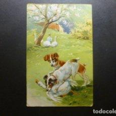 Postales: PERROS CON OCAS POSTAL. Lote 183400258