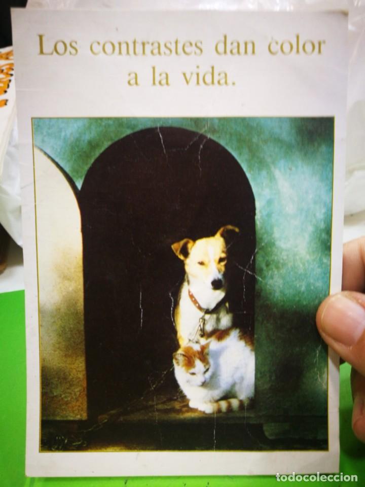 POSTAL PERRO Y GATO ARRUGADA (Postales - Postales Temáticas - Animales)
