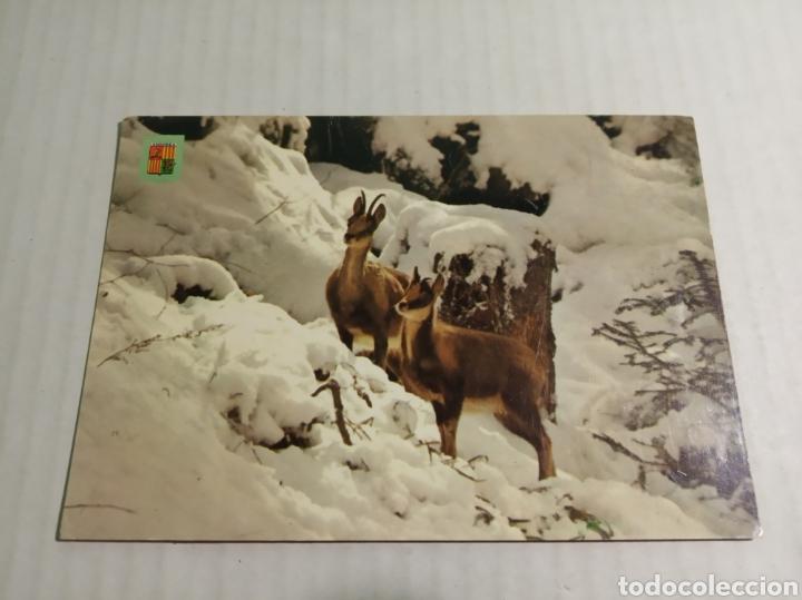 VALLS DE ANDORRA (Postales - Postales Temáticas - Animales)