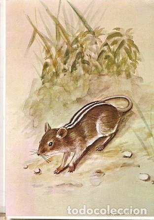 MOZAMBIQUE ** & I.P MAMÍFEROS DE MOZAMBIQUE, RHABDOMYS PUMILIO 1983 (1784) (Postales - Postales Temáticas - Animales)