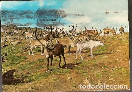 NORUEGA & CIRCULADO, RENO, NORDKAPP A ÉPINAC 1967 (3539) (Postales - Postales Temáticas - Animales)